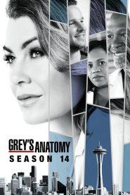 Grey's Anatomy: Temporada 14