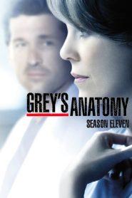 Grey's Anatomy: Temporada 11
