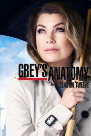 Grey's Anatomy: Temporada 12